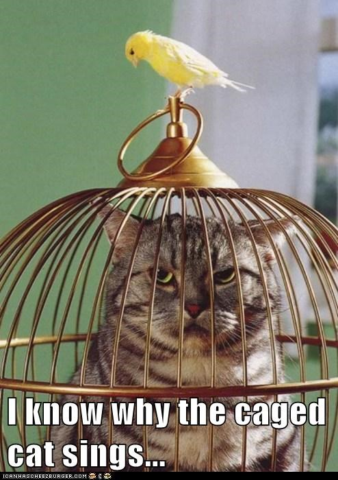 bird cage cat i know why the caged bird i know why the caged bird sings trapped - 6323973120