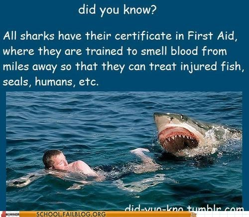 did you know,first aid,fun facts,sharks