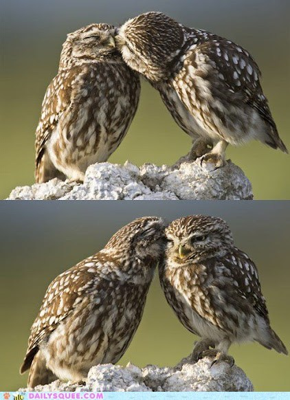 beaks bird feathers Owl secret whisper - 6324145664