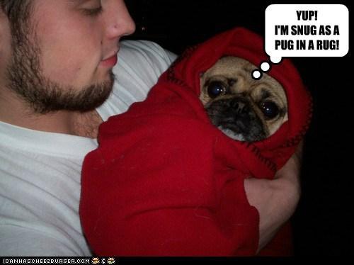 baby blanket dogs pug snug - 6324185856