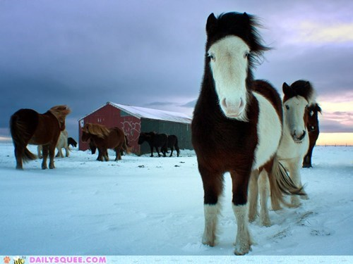 glow horse pony snow warm fuzzies winter