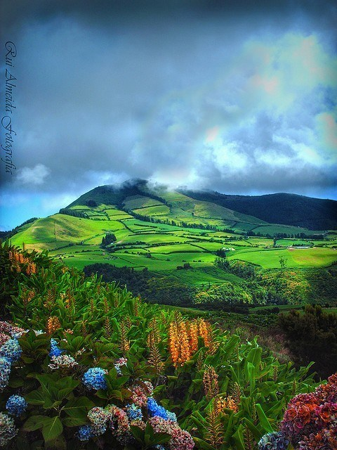 flowers,island,mountain,portugal,valley