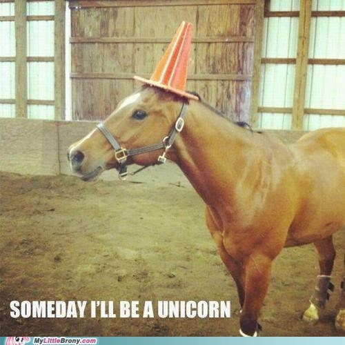 horse,IRL,traffic cone,unicorn