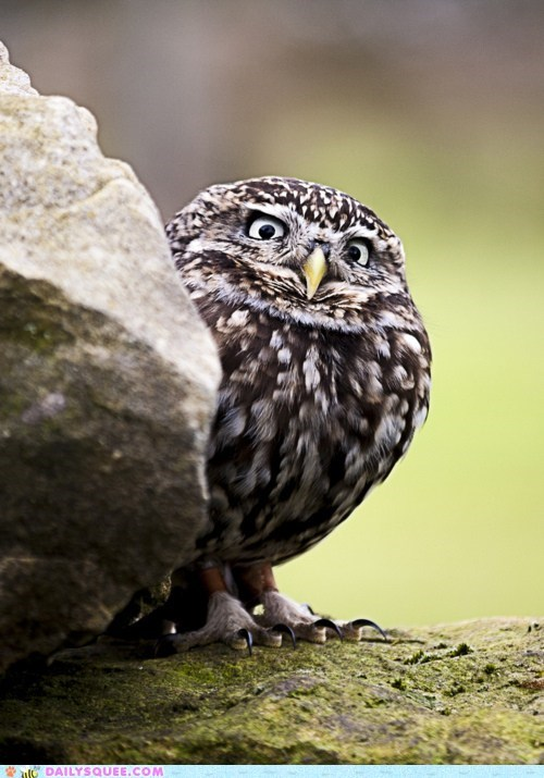 bird evil eye feathers Owl suspect suspicious - 6324433408