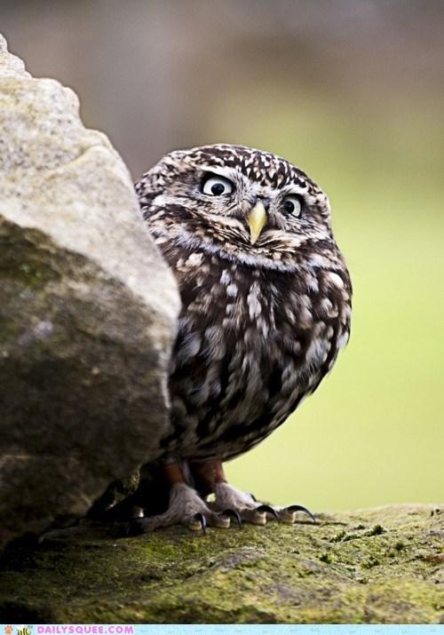 bird evil eye feathers Owl suspicious - 6324433408