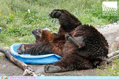 bear,grizzly bear,if i fits i sits,kiddie pools,playing,squee,swimming