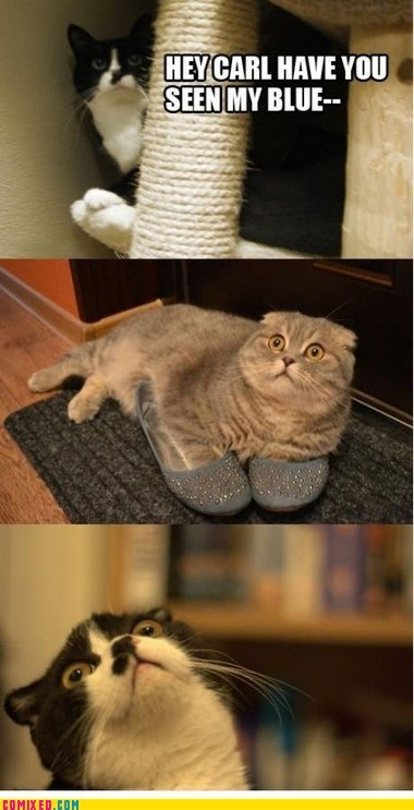 best of week,carl,cat,Cats,slippers