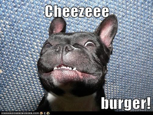 Cheezburger Image 6324706304