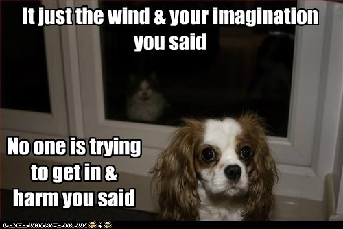 cat,dogs,dont-turn-around,king charles spaniel,scary