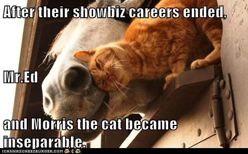 careers,cat,cute,end,hollywood,horse,inseparable couple,mr ed,snuggling