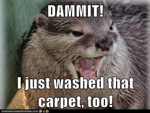 angry,carpet,dammit,mess,otter,washed