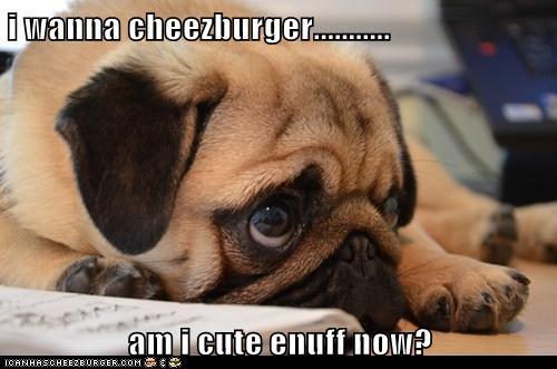 Cheezburger Image 6325011712
