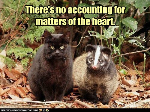 cat,heart,love,possum