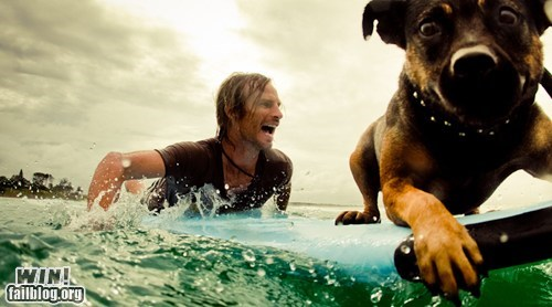 buddy dogs sports surfing whee - 6325172480