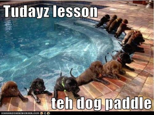 dogs doggy paddle lab pool puppies swimming - 6325196032