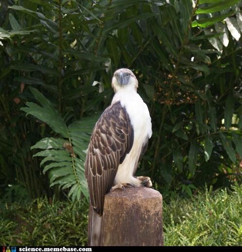 amazing,birds,eagle,Life Sciences,monkey
