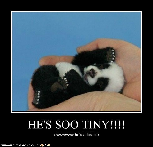 HE'S SOO TINY!!!! awwwwww he's adorable