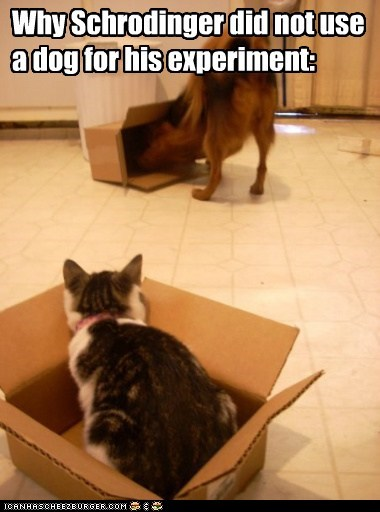 box cardboard boxes cat dogs experiments schrodingers-cat what breed