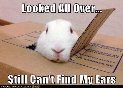 box bunny cant-find-it ears looking lost - 6325892352
