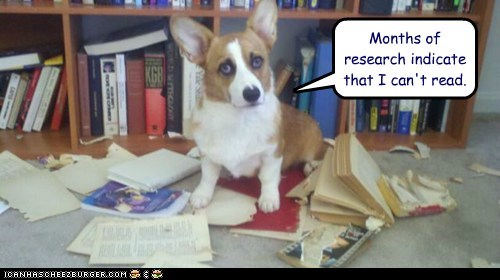 books,corgi,dogs,illiterate,read,research lab