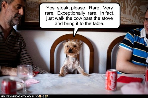 best of the week,dogs,food,Hall of Fame,steak,table,yorkie,yorkshire terrier