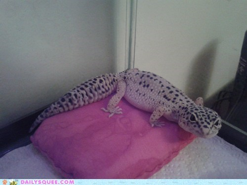 gecko pet Pillow pink reader squee - 6326501632
