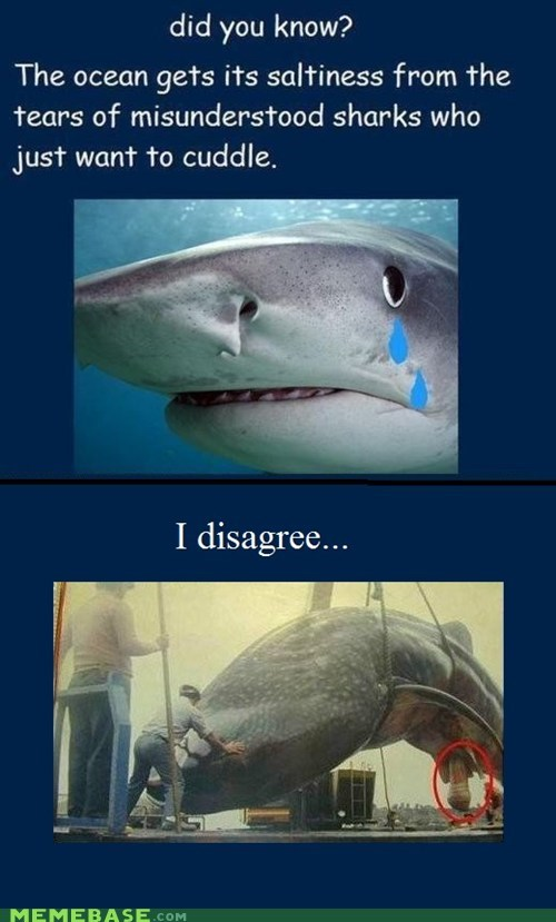 Memes Sad salt sharks source tears - 6326748416