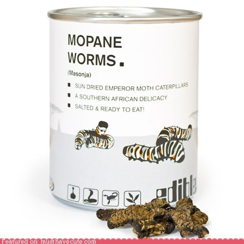 canned dried salty snack worms - 6326793472