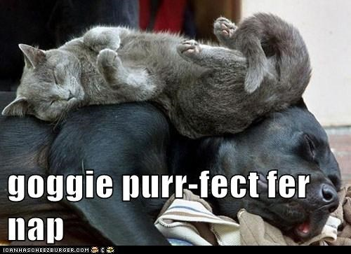 cat cuddle dogs nap purr what breed - 6327041024