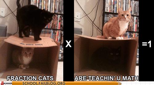 Cats educational cats fraction cats teachin-u-math - 6327070976
