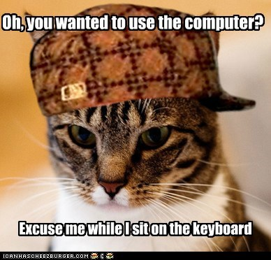 annoying Cats computers in the way Memes rude Scumbag Cat scumbags