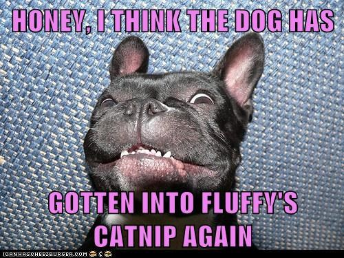 HONEY, I THINK THE DOG HAS GOTTEN INTO FLUFFY'S CATNIP AGAIN