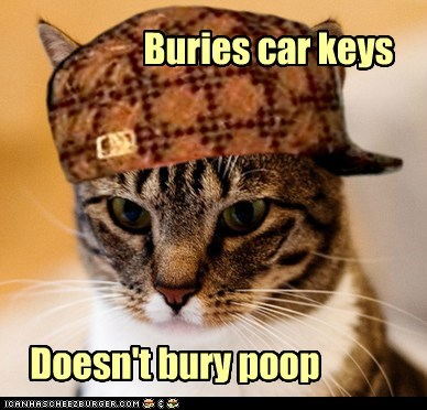 annoying buried Cats gross keys Memes poop Scumbag Cat scumbags - 6327661824