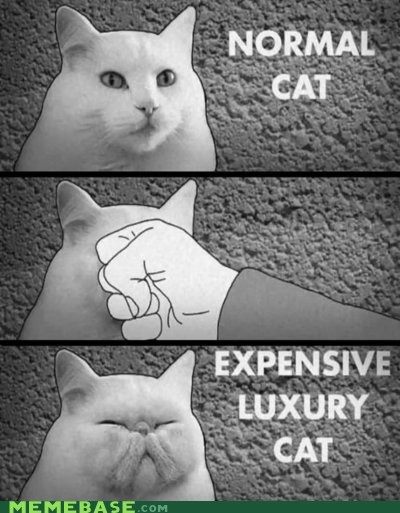 cat expensive luxury Memes not advised punch - 6327691264