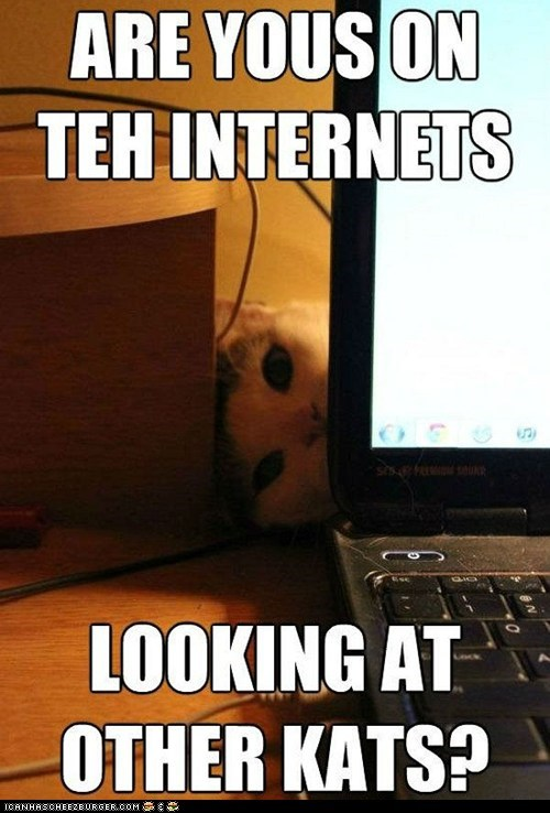 best of the week Cats computers internet jealous jealousy lolcats peeking spying the internet - 6327815168