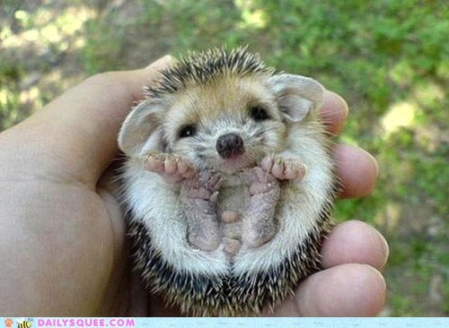 ball feet hedgehog prickly rolly toe beans