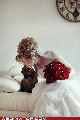 bride,Cats,funny wedding photos,KISS,kittehs