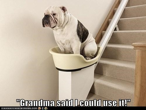 bulldog,dogs,grandma,machinery,stairs