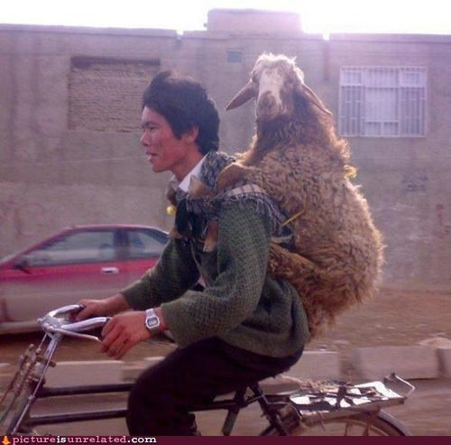 backpack,bike,goat,human,no time to explain,wtf