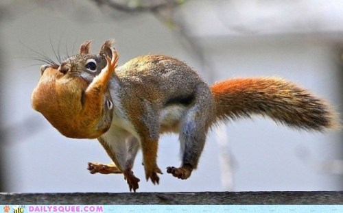 baby,carrying,hurry up,mommy,running,squirrels