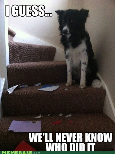 dogs Memes mysteries unsolved - 6328102656