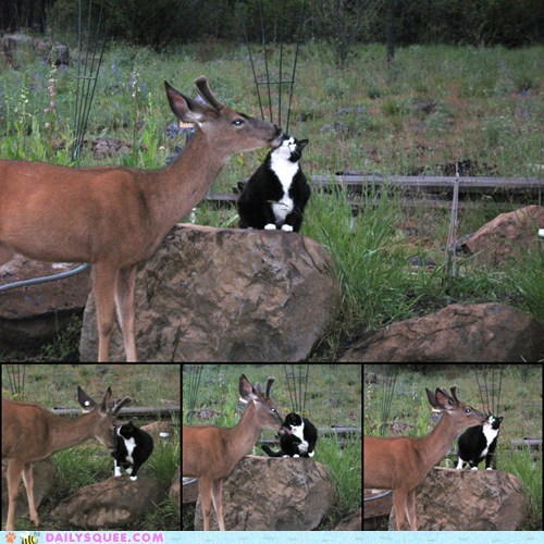 cat,deer,Interspecies Love,kisses,squee,Valentines day