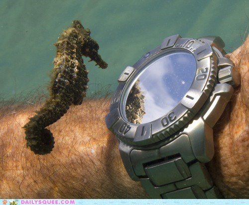 clock,seahorse,squee,underwater gear,watch,what time is it