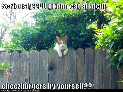 Cheezburger Image 6328251392