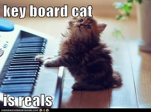 Do you think key bourd cat is real?