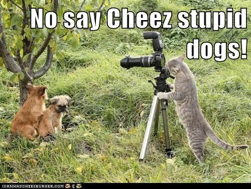 No say Cheez stupid dogs!