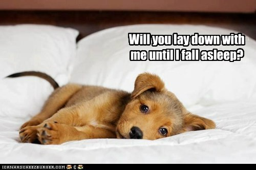 bed beds captions puppies puppy sleep sleeping squee what breed - 6328536832