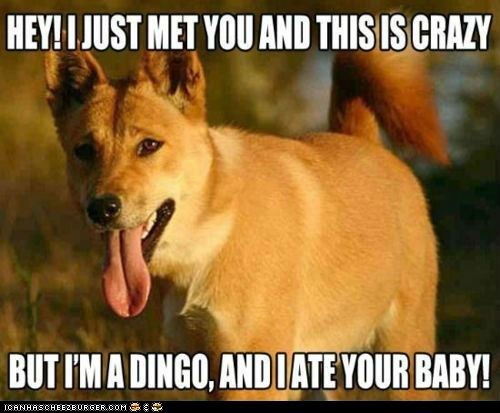 call me maybe carly rae jepsen dingo at your baby dingos dogs lyrics Memes Songs - 6328542976