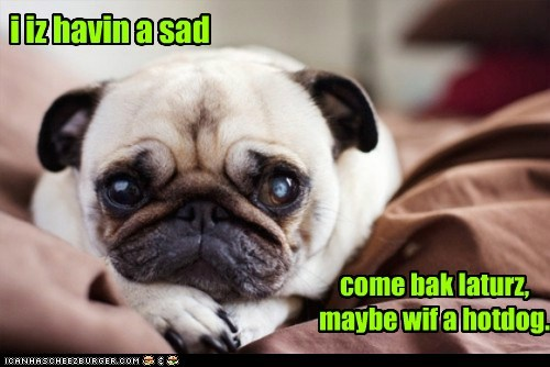 dogs hotdog pug Sad therapy - 6328733184