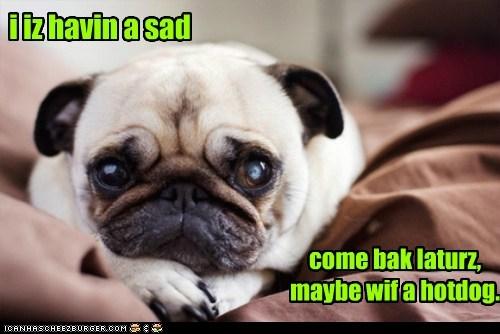 dogs hotdog pug Sad therapy - 6328733184